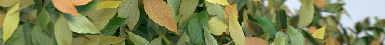 One Leaf Material & Ninja Color